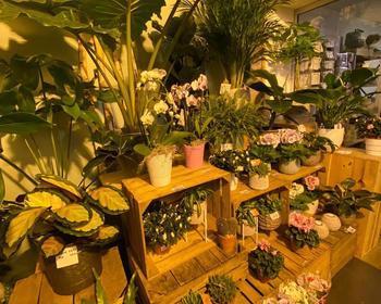 Timmermans - Van Tendeloo - Bloemenwinkel