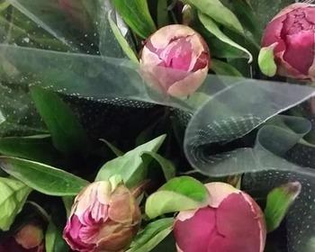 Timmermans - Van Tendeloo - Snijbloemen